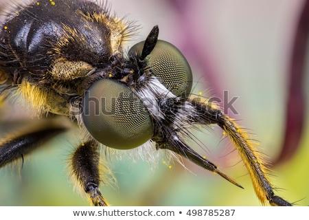 Rapinatore volare estrema macro shot aggressivo Foto d'archivio © macropixel