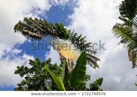 Eindruck Landschaft Karibik Insel Berg Stock foto © prill