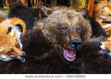 bourré · Fox · brun · isolé · blanche · visage - photo stock © winterling