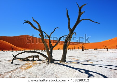 morts · arbre · Namibie · rare · nuageux · ciel - photo stock © TanArt
