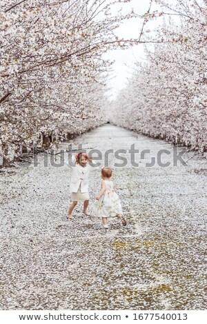 pitypangok · virágzó · mező · citromsárga · tavasz · legelő - stock fotó © taden