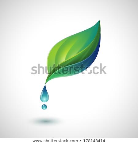 Gotas de água folha verde eco símbolo folha beber Foto stock © djdarkflower