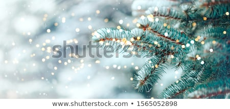 Christmas green card with light and snow around Stock photo © romvo