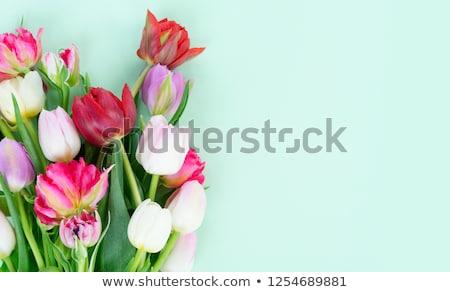 Virágcsokor friss tulipánok fehér húsvét virágok Stock fotó © Marfot