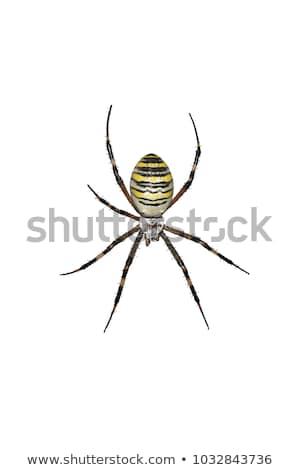 Wesp spin macro natuur Stockfoto © ajt