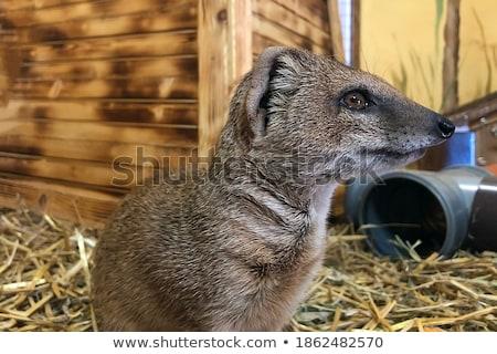 áll őr természet park állat néz Stock fotó © guffoto