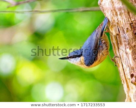 yeme · tohumları · göz · doğa · kuş · hayvanlar - stok fotoğraf © ivz