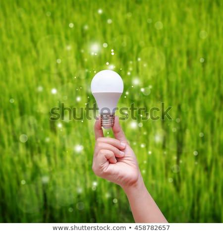 energie · besparing · lamp · hand · groen · gras · gebarsten - stockfoto © ifeelstock