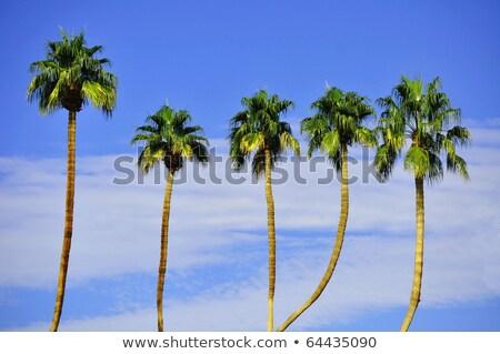árvores neve blue sky nuvens sol paisagem Foto stock © All32