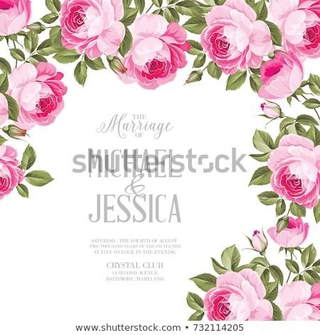 Gyönyörű rózsaszín rózsa keret fehér tavasz szeretet Stock fotó © tetkoren
