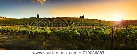 zonsondergang · najaar · oogst · rijp · druiven · hemel - stockfoto © dar1930