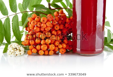 Cropped red ash-berry with jar of juice on white Stock photo © dla4
