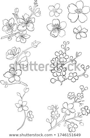 Belo ameixa flores florescer primavera Japão Foto stock © yoshiyayo