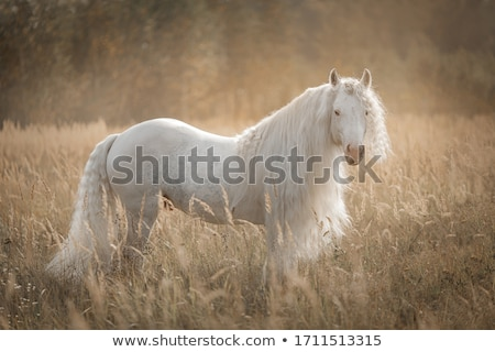 Foto stock: Belo · sorridente · menina · equitação · cavalo · outono