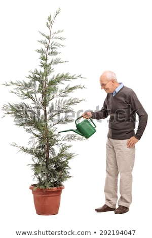 Man with watering can looking at the tree Stock photo © bluering