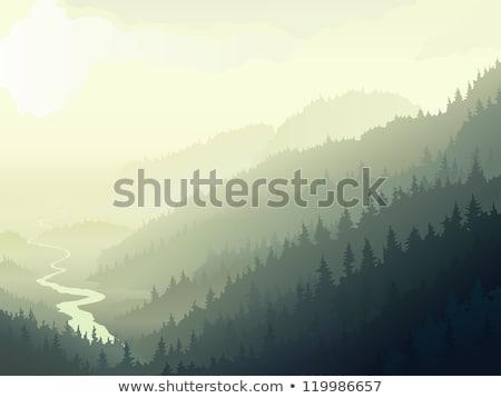 Wild coniferous wood in morning fog. stock photo © Vertyr