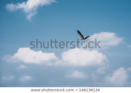 Madarak repülés kék ég háttér szépség űr Stock fotó © OleksandrO
