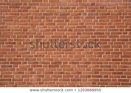 Eccellenza bianco muro di mattoni doodle icone in giro Foto d'archivio © tashatuvango