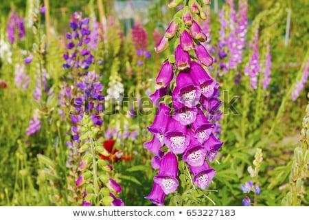 яркий Purple цветы лист Сток-фото © Virgin