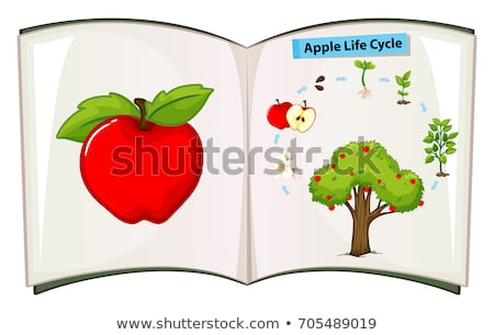 book of apple life cycle stock photo © colematt
