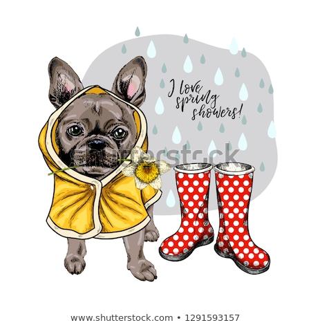 Stock photo: Cartoon Bulldog Walking