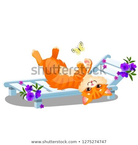 赤 縞模様の 猫 サンベッド 演奏 蝶 ストックフォト © Lady-Luck