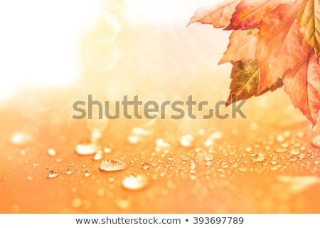 Stock photo: Autumn leaves with natural water droplets