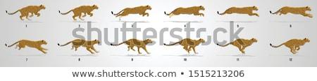 チーター 自然 フレーム 実例 葉 背景 ストックフォト © bluering