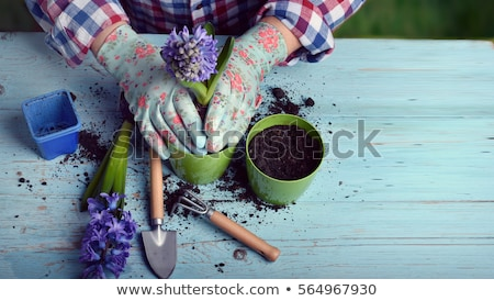 woman planting flowers in pots gardener working stock photo © robuart