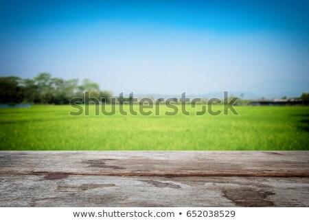 選択 フォーカス 空っぽ 古い 木製のテーブル トウモロコシ畑 ストックフォト © Freedomz
