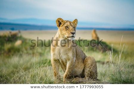 Selva safari naturaleza animales caza Foto stock © robuart
