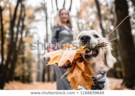 Woman Walking Dog on Leash in Autumn Forest Park Stock photo © robuart
