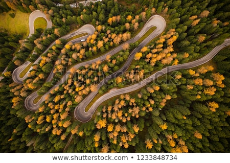 Aerial top down view of autumn forest with green and yellow trees. Mixed deciduous and coniferous fo Stock photo © galitskaya