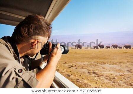 Vadvilág fotós lövöldözés vad erdő park Stock fotó © dmitry_rukhlenko