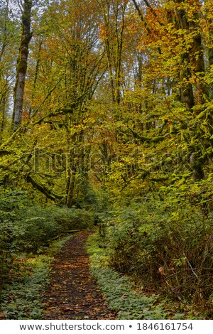 Autumn forest, meandering footpath. Stock photo © justinb
