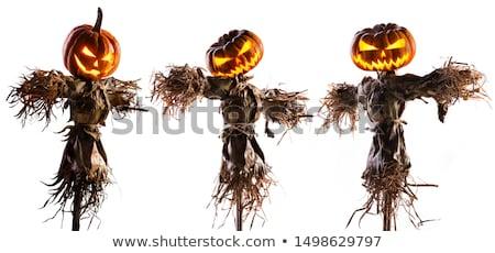 vogelverschrikker · veld · groenten · hemel · man · tuin - stockfoto © ivonnewierink