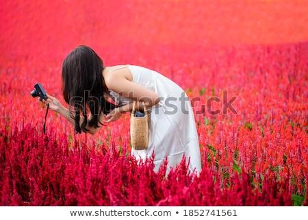 Bloem boerderij mooie bloemen bloeien landschap Stockfoto © kwest
