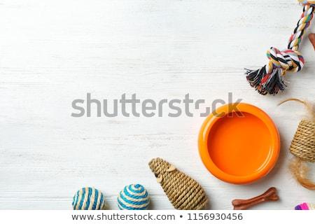 Stok fotoğraf: Pet In Wooden Bowl