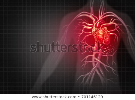 cardiovascular circulation Stock photo © Lightsource