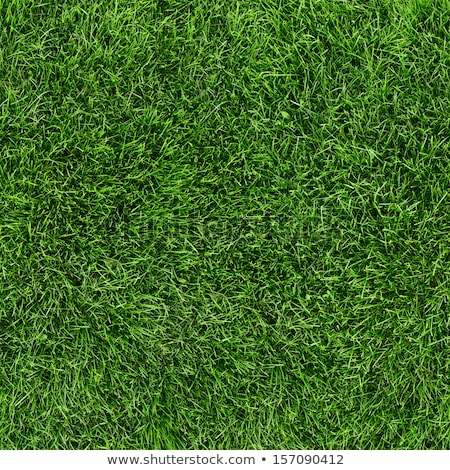 seamless texture green meadow grass stock photo © tashatuvango