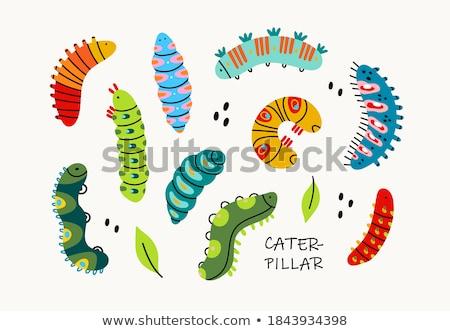 Bug mano grande piedi sfondo animali Foto d'archivio © dinozzaver