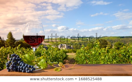 Viticulture and wine Stock photo © Porteador