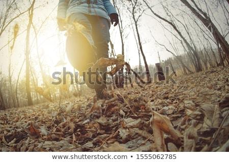 Rúg felfelé levelek nő ősz nap Stock fotó © jayfish