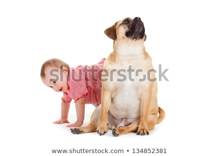little girl with the big dog. Baby girl and her best friend. Stock photo © EwaStudio