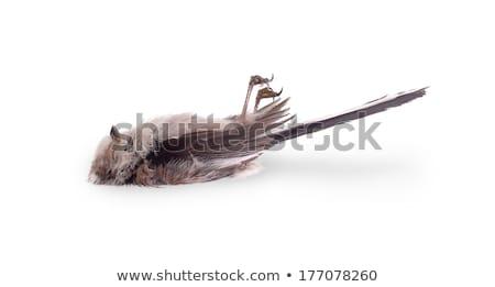 石炭 · 売り言葉 · 孤立した · 白 · ツリー · 自然 - ストックフォト © michaklootwijk