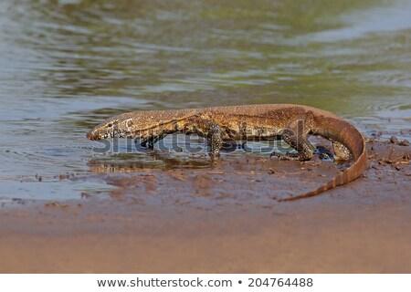 Eau suivre reptile up main humaine oeil Photo stock © fouroaks