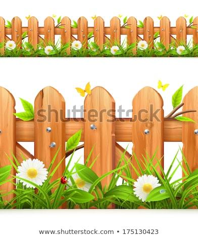 camomilla · fiori · legno · recinzione · Daisy · legno - foto d'archivio © yelenayemchuk