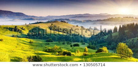 summer landscape in Carpathians Stock photo © OleksandrO