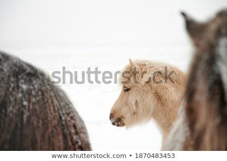 Bevroren paard snuit achter hek winter Stockfoto © tepic