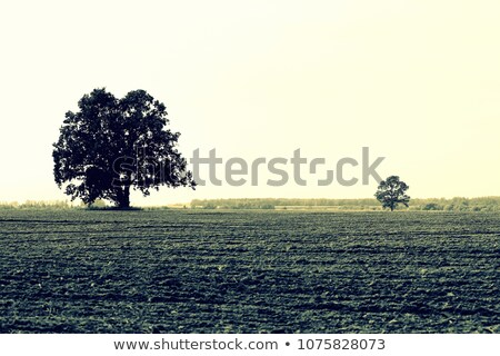 very old and broken trees stock photo © ondrej83